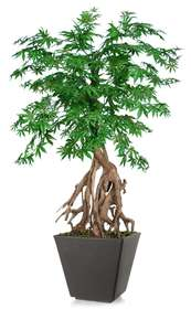 Maple Root Mini 150 cm Green